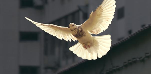 Appel à Témoignage sur les projets de la paix